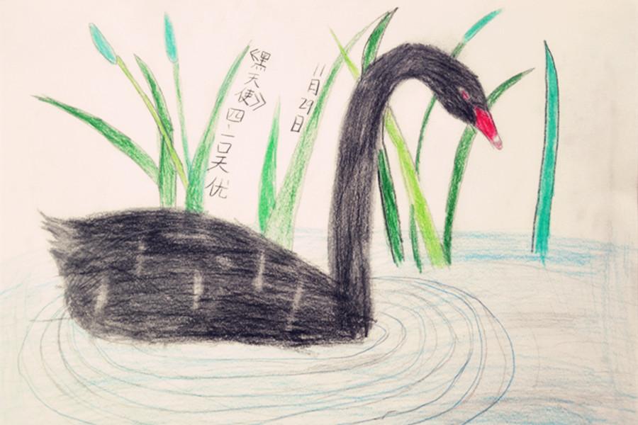郑州中学附属小学四年级选修课上,学生利用铅笔书写别致的黑天鹅,树立